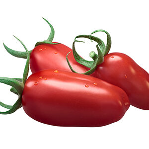 Tomate pebroter